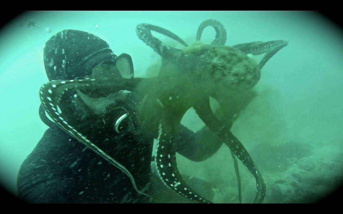 beau greaves octopus