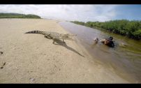 Beau Greaves crocodile