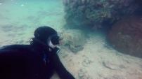 Beau Greaves turtle